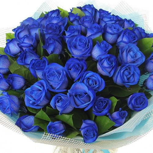 Цветы розы синие
