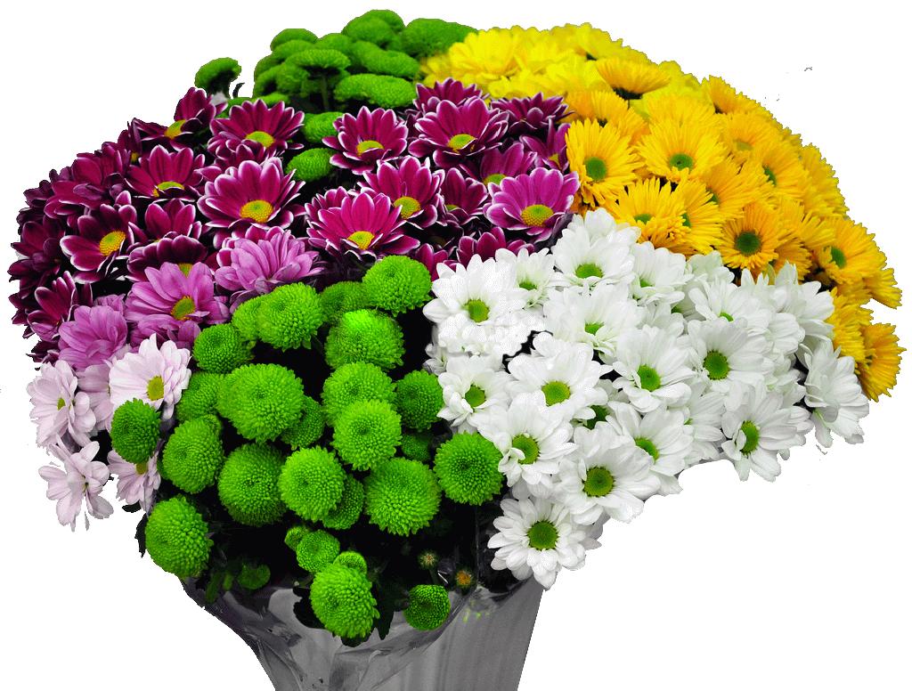 http://www.florist.kg/uploads/07-02-12/d37502e530be229a254925eecf404580.png